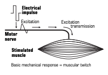 compex sport electrostimulation